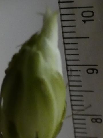8月23日10cm.jpg