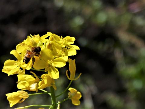 a過去花粉.png